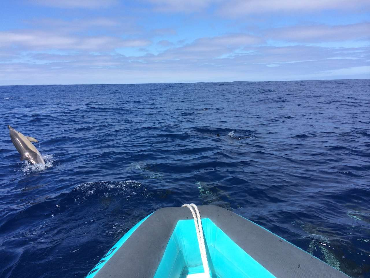 Whale and dolphin watching, Madeira