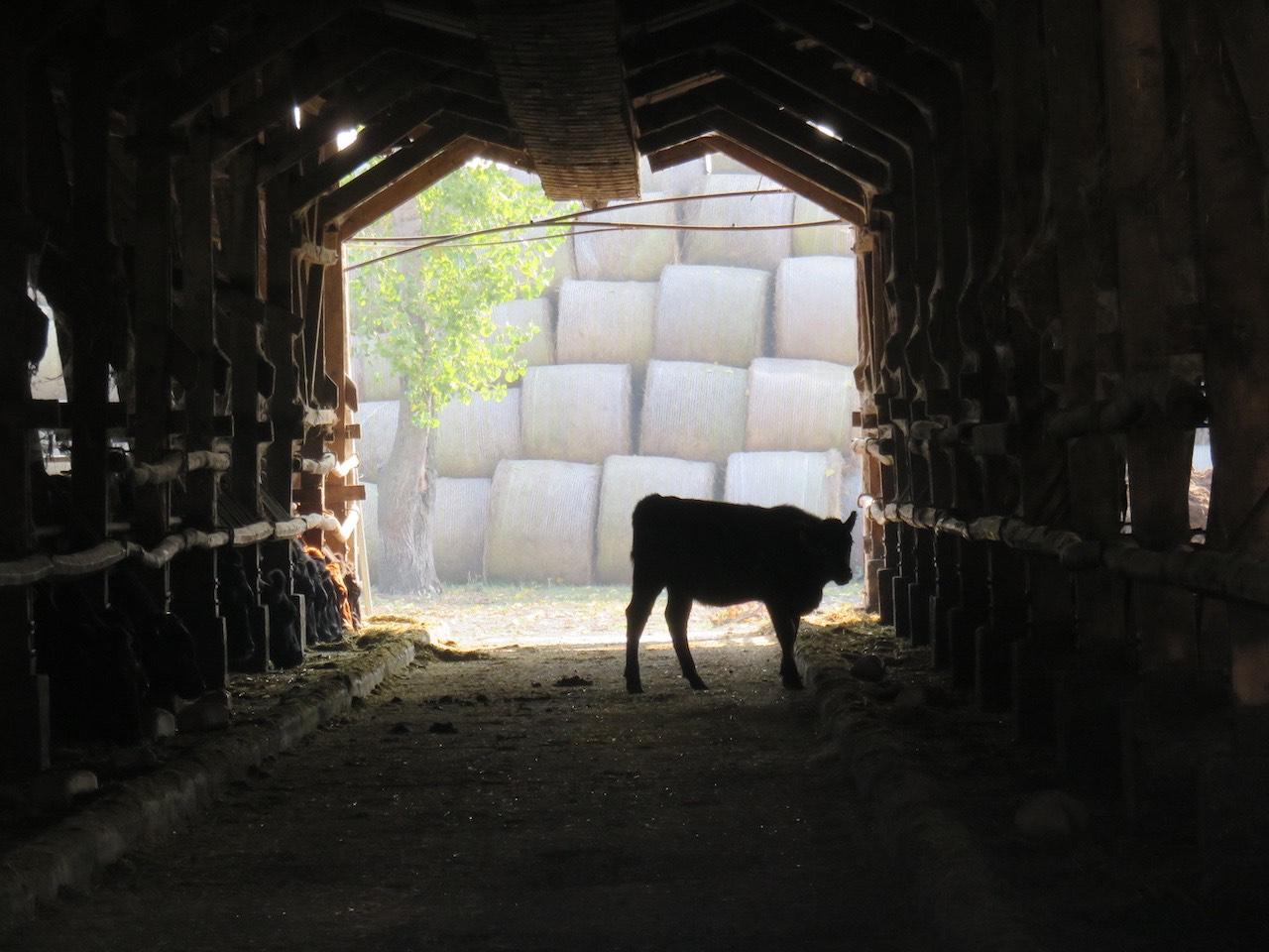 Meinklang Farm