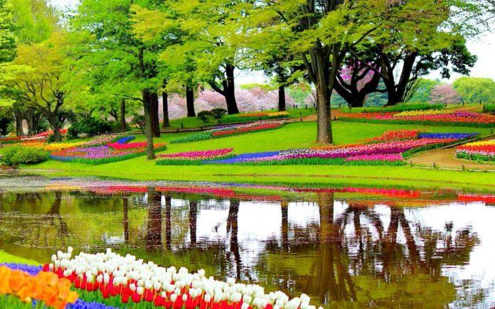 Amsterdam Kaukenhof Gardens