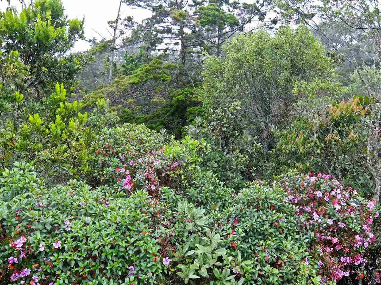 Arví Park, Medellin, Columbia