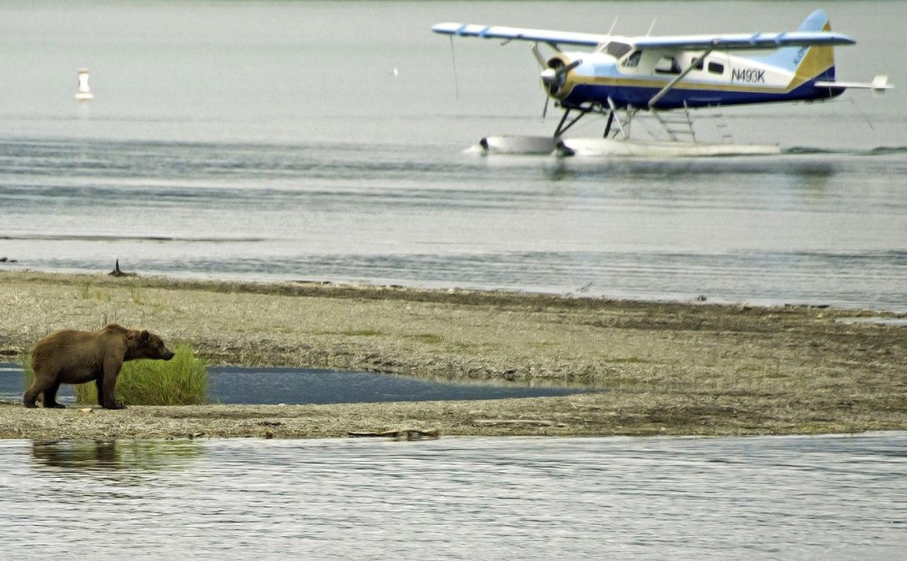 Bear & Floatplane c Jim Chamberlain
