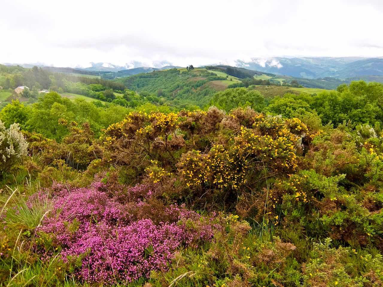 Camino Primitivo - Galicia