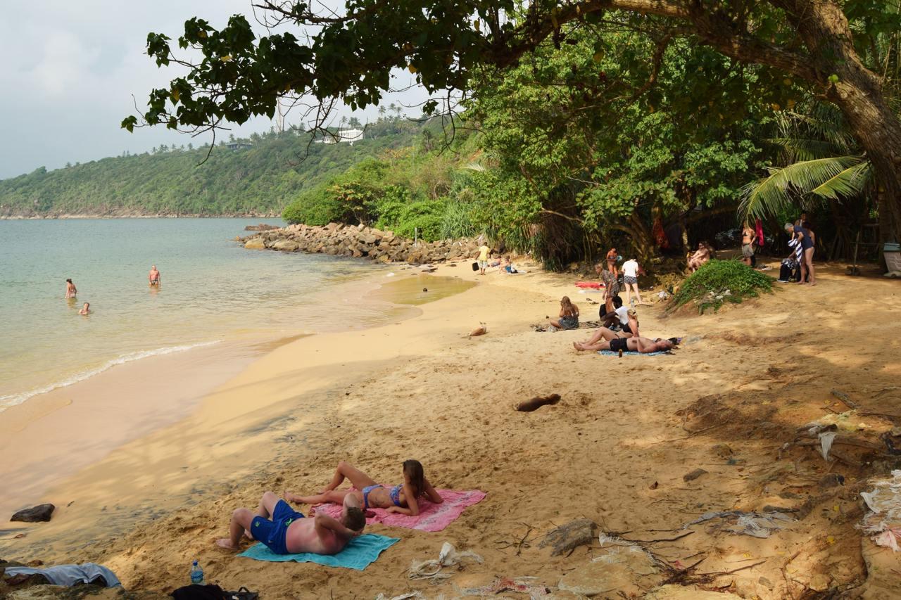 Cantaloupe Levels Jungle Beach