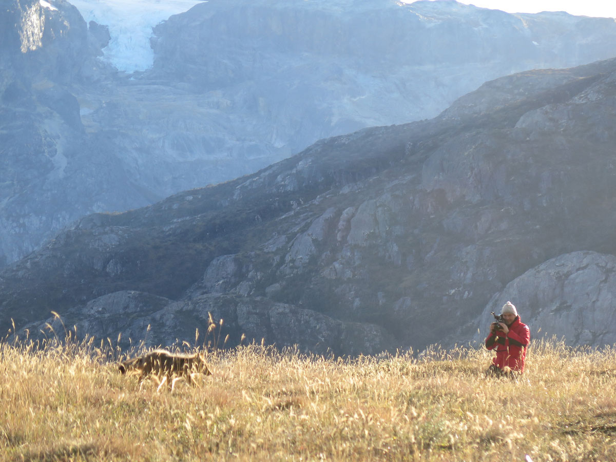 Capturing the movements of a Patagonian fox