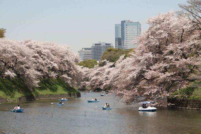 Sakura, Chidorigafuchi Moat, Tokyo Imperial Palace