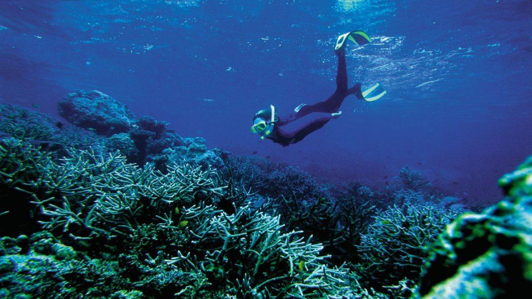 Diver c.Arely Vera