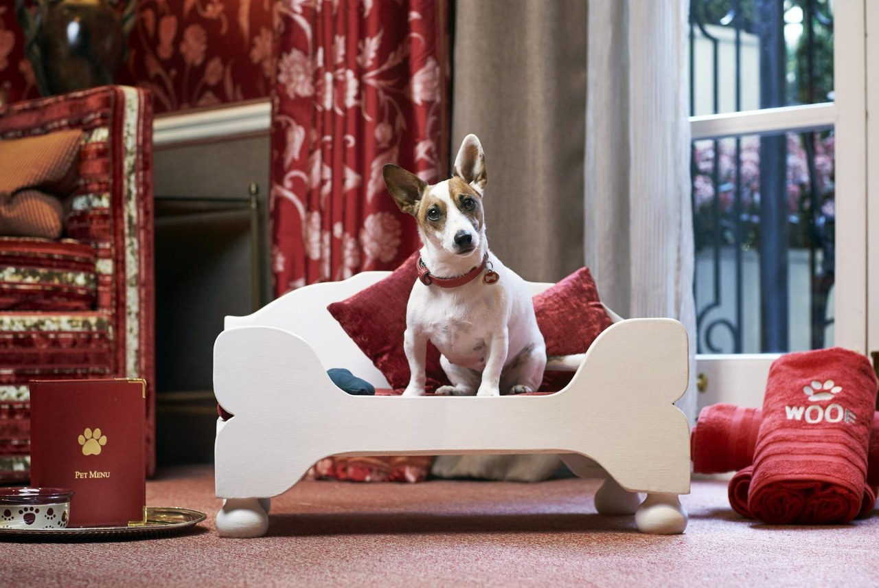 Top 10 Dog Friendly Hotels In The Uk