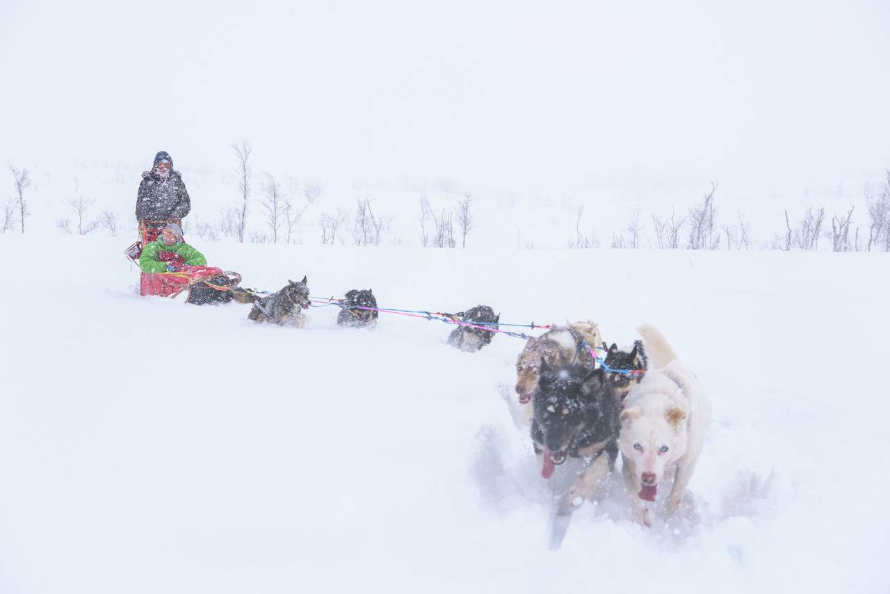 Dogsledding at Tromso Villmarksenter
