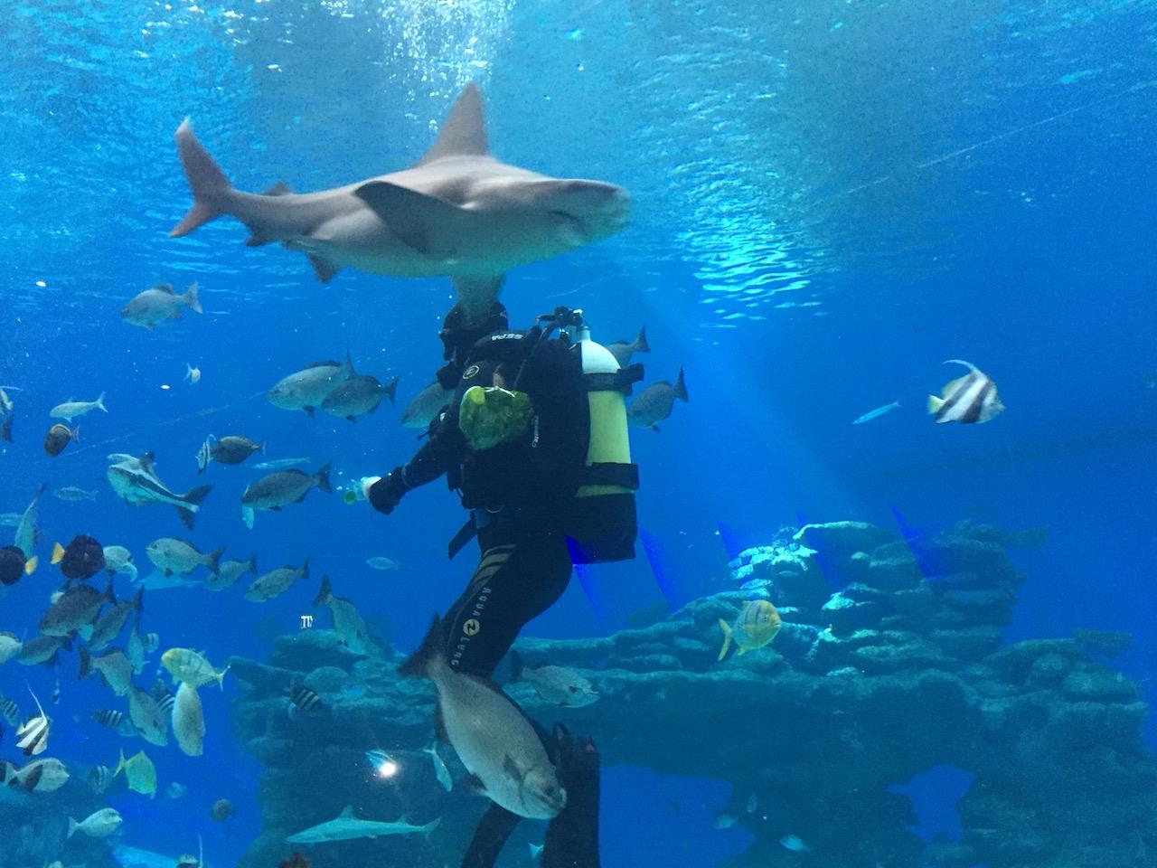 Underwater Observatory Marine Park Eilat