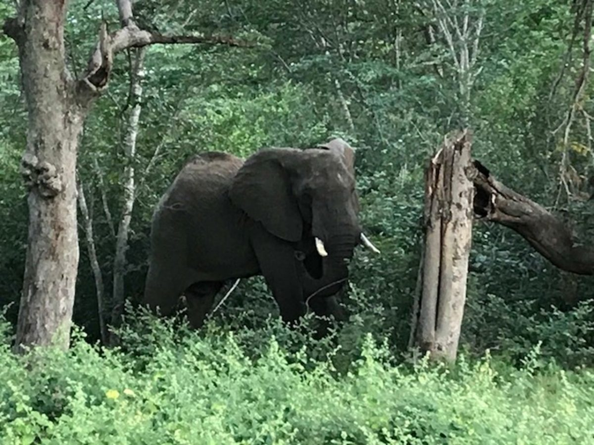 Elephant by roadside, Matobo National Park, Zimbabwe