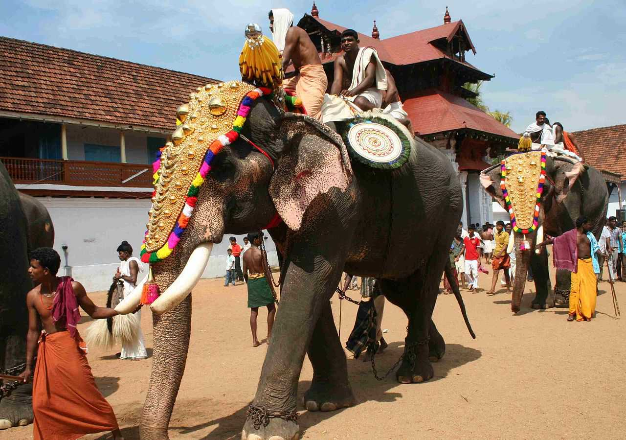 Elephant in Thrippunithura Kerala
