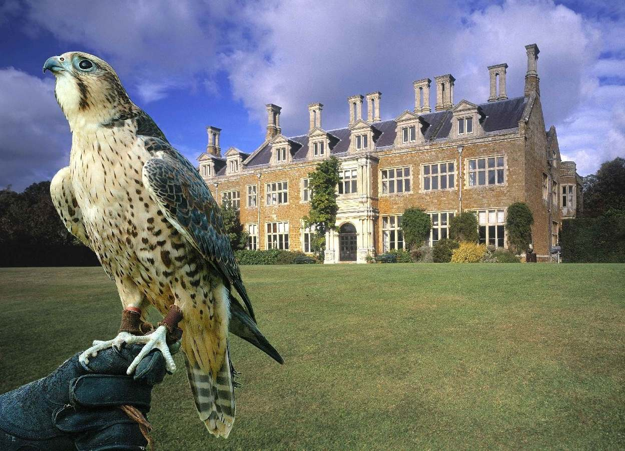 Falcon Holdenby House, Northamptonshire