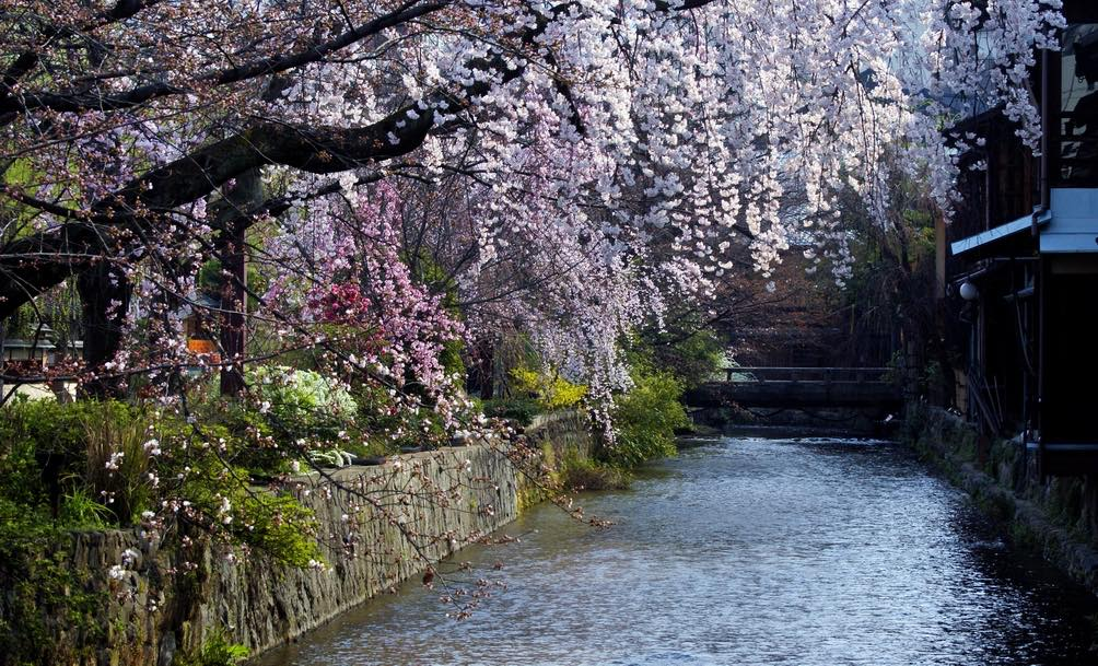 Gion Shirakawa during spring blossom season
