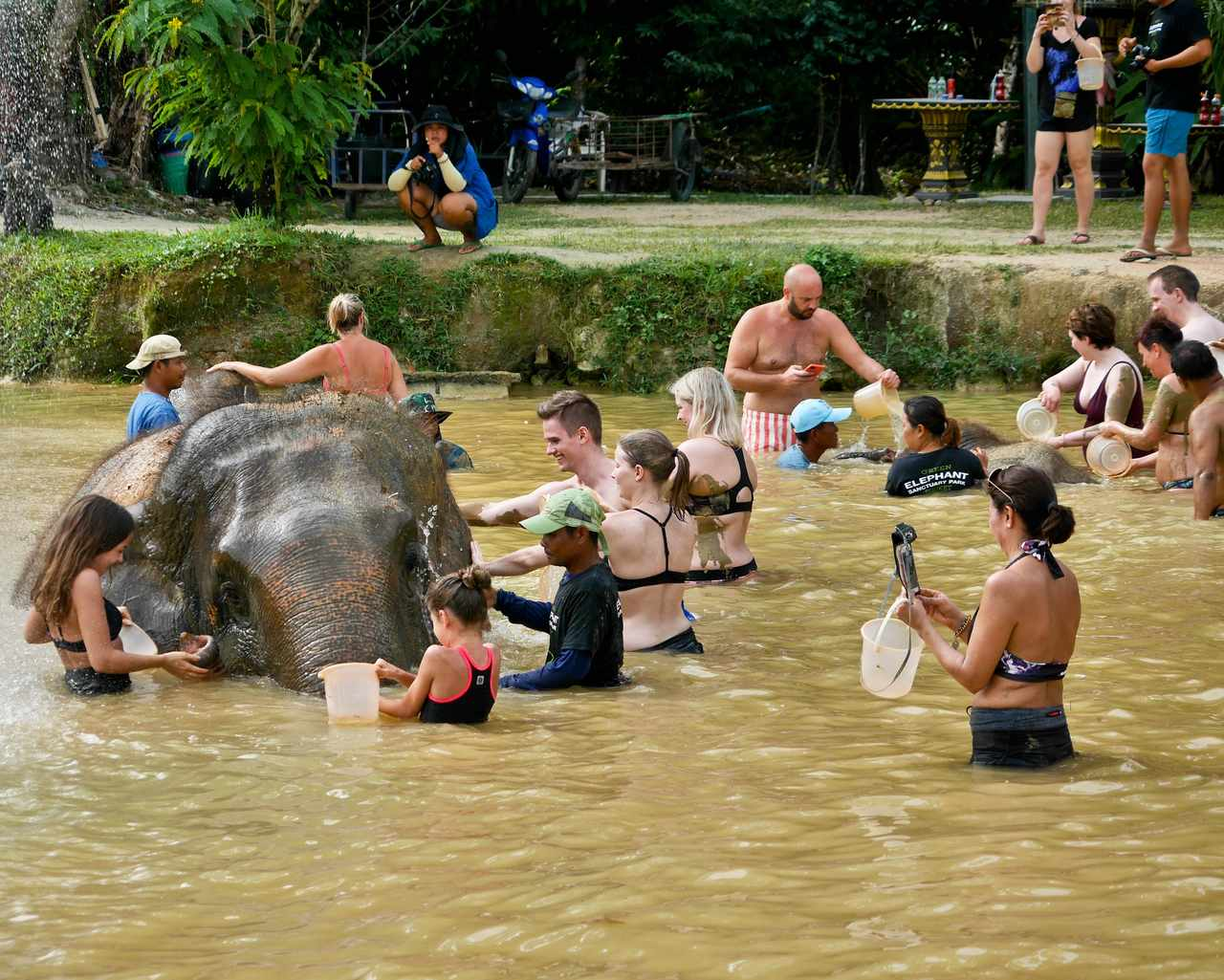 Green elephant sanctuary