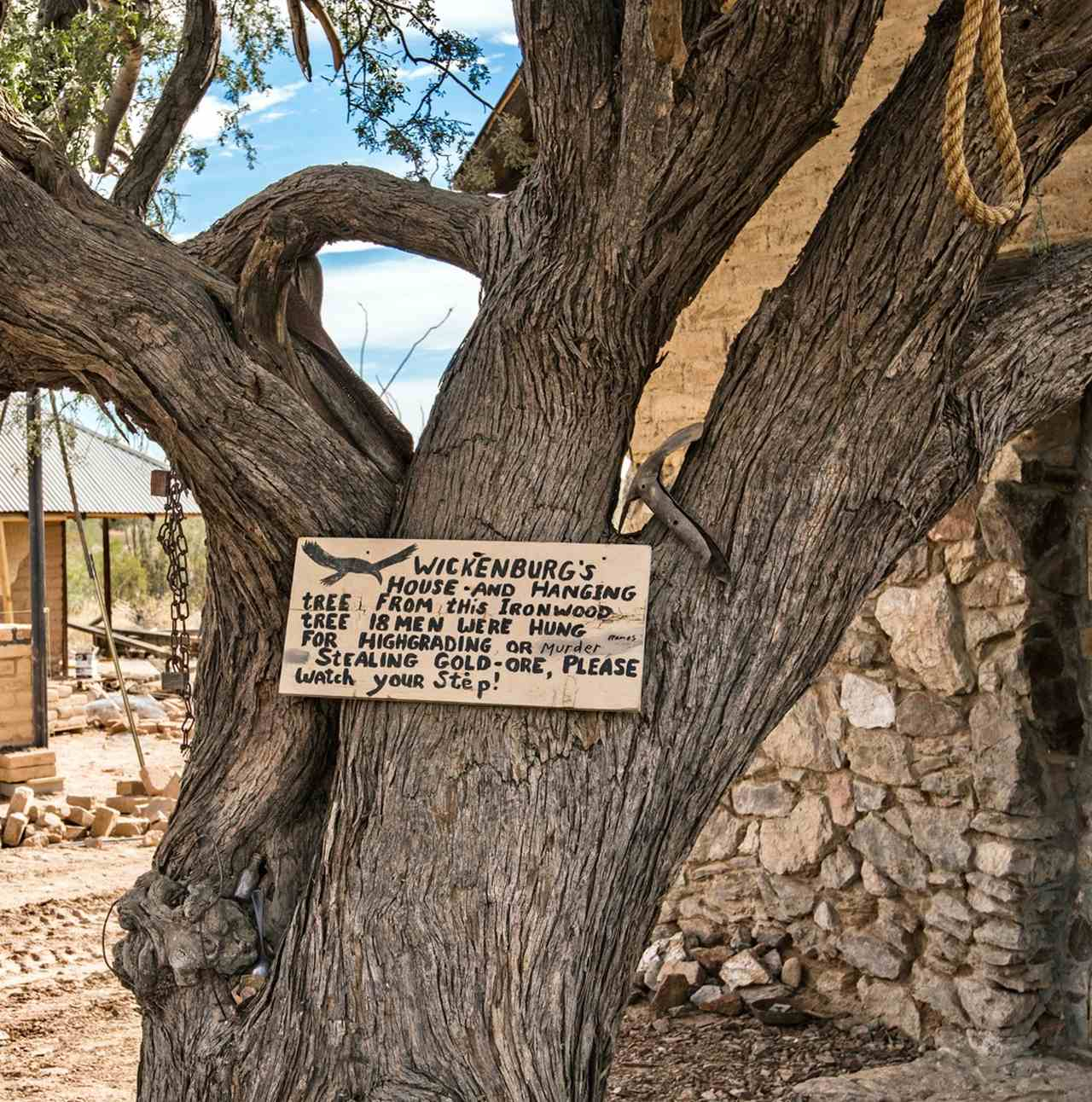 Hanging Tree in Vulture City