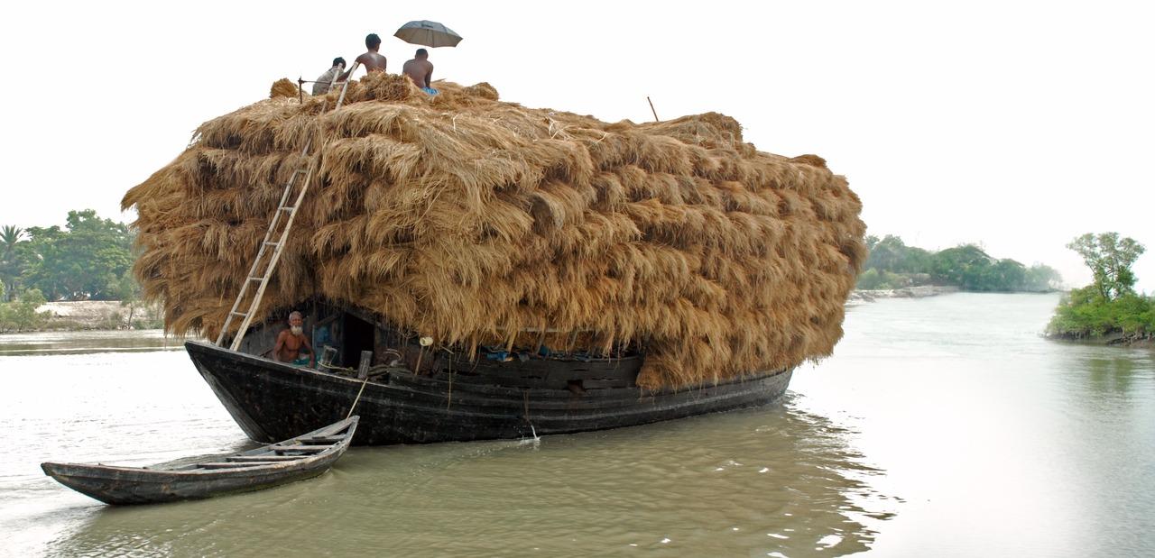 Hay transportation in Boat