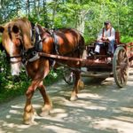 Horse Carriage Acadian Village