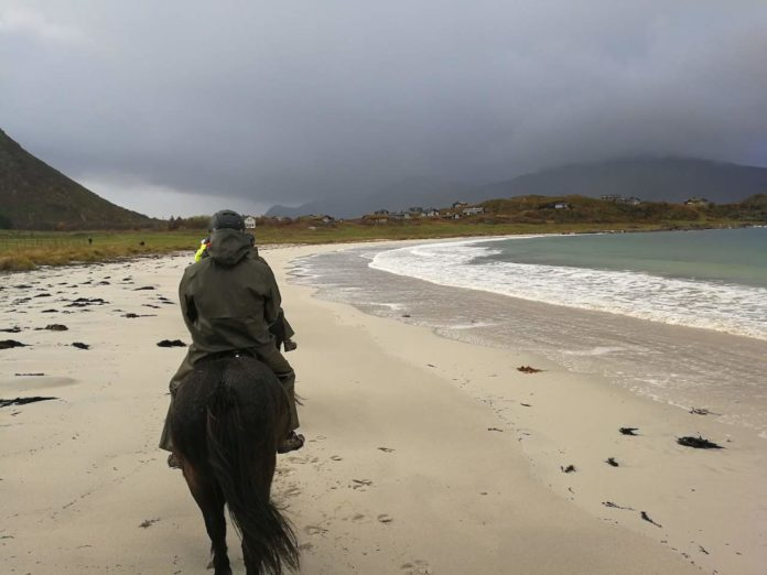 Icelandic horse riding in Norway