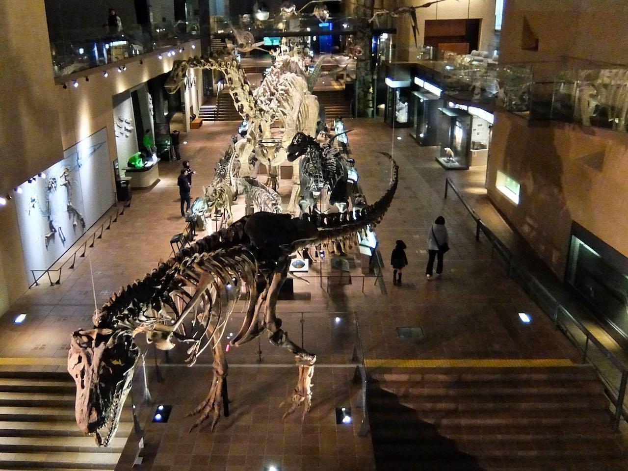 Kitakyushu Natural History Museum
