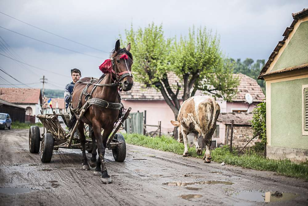 Locals still get around using a traditional horse and cart