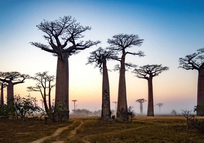 15 day tour of Madagascar with Explore