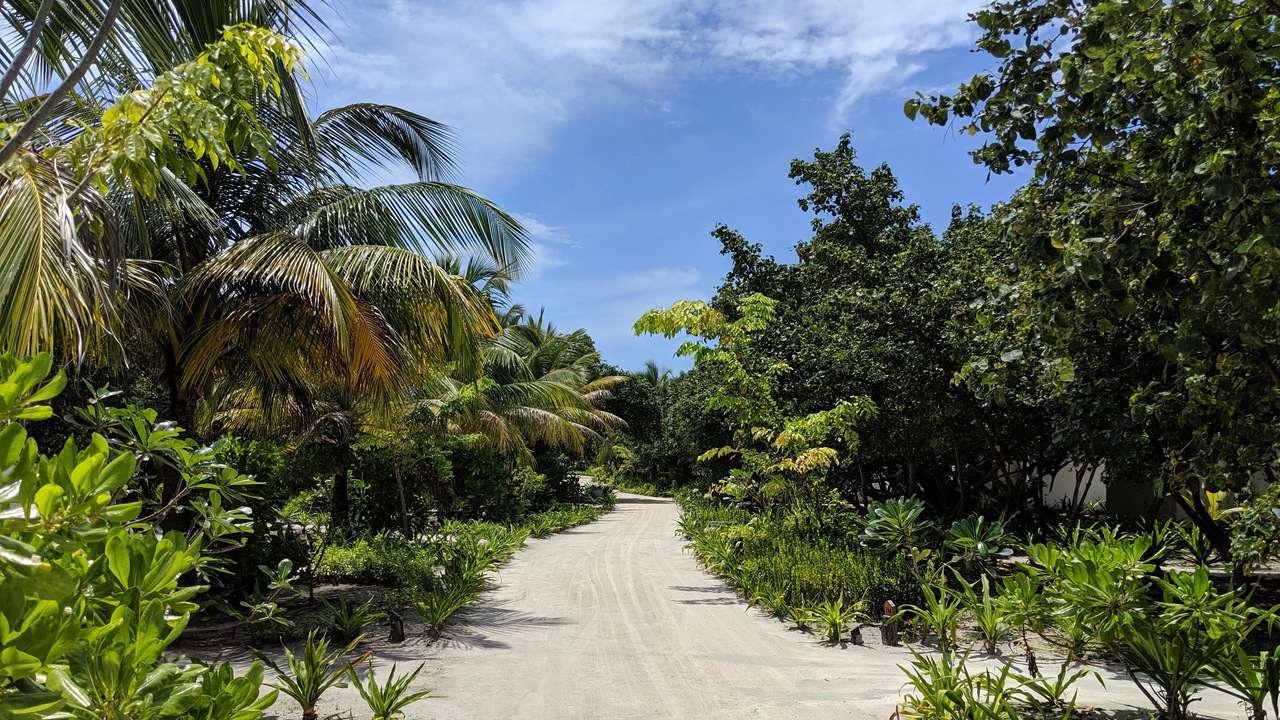 Maldives rainforest