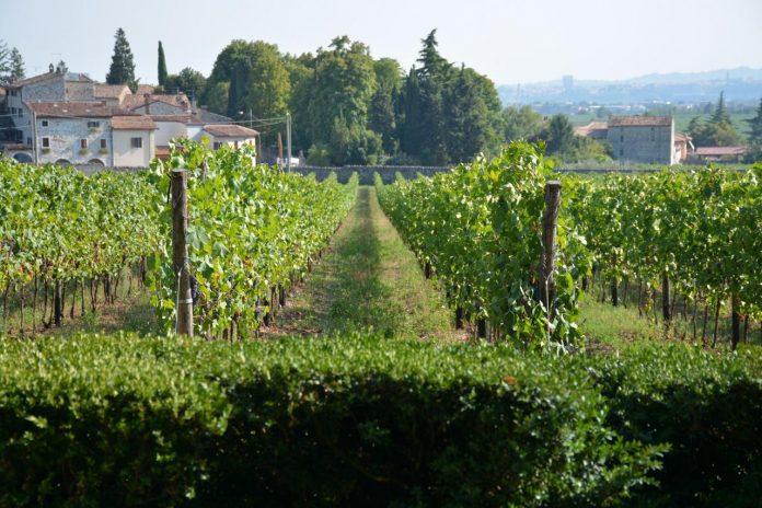 Masi winery in Sant Ambrogio di Valpolicella