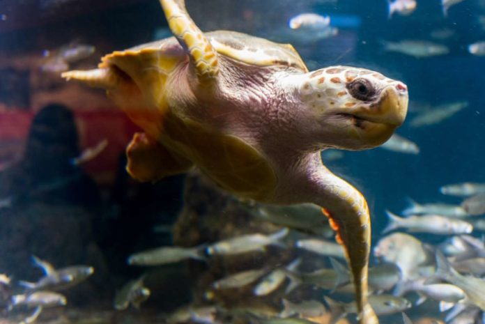 Nausicaä sea life centre, Boulogne-Sur-Mer