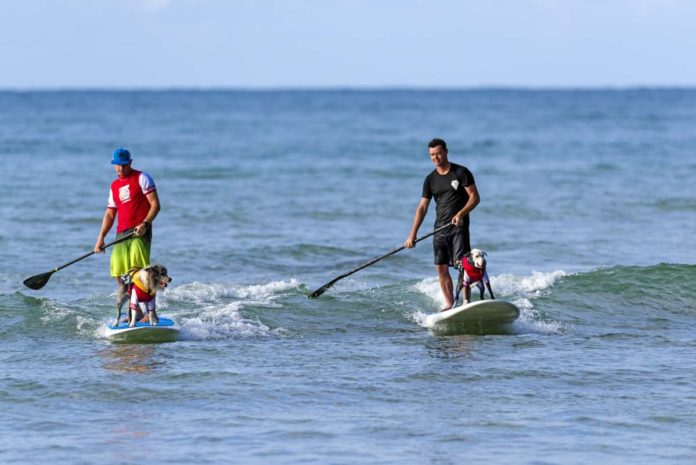 Noosa Festival of Surfing - two sufers with dogs
