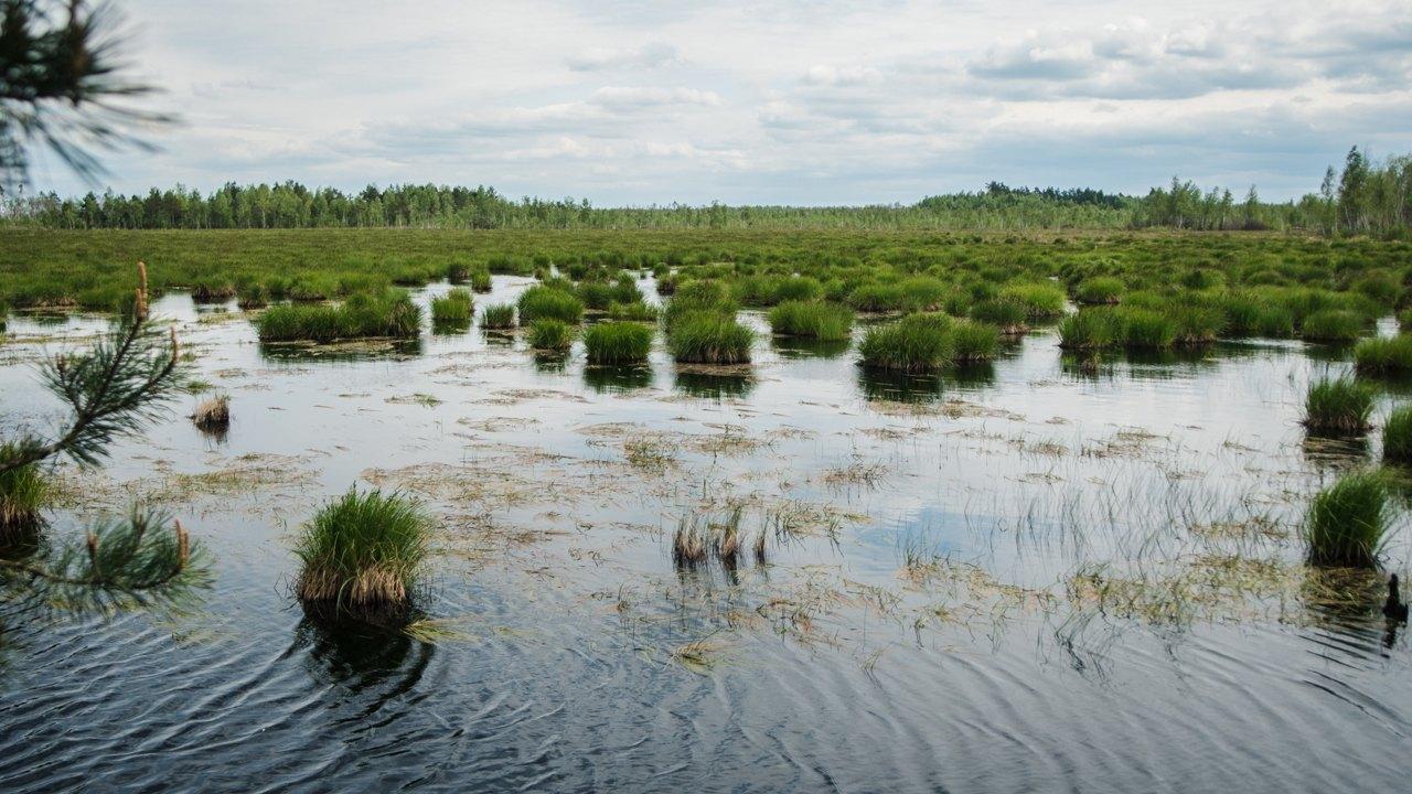 Olmansk bogs Belarus