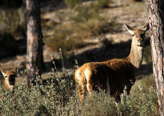 Animal spotting in Parque Nacional de Doñana