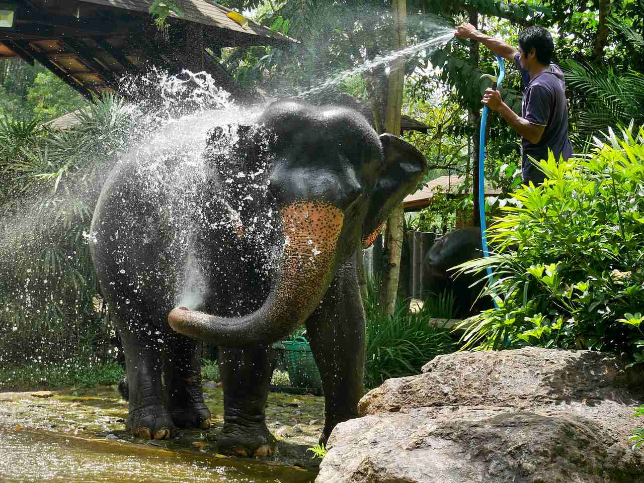 Phang Nga Hosing elephant