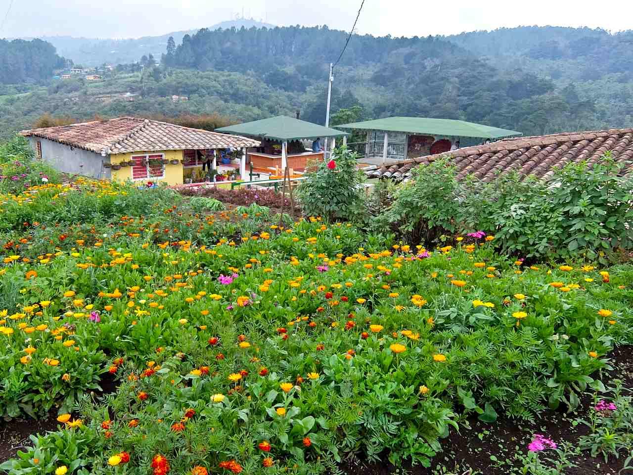 Santa Elena Flower Gardens