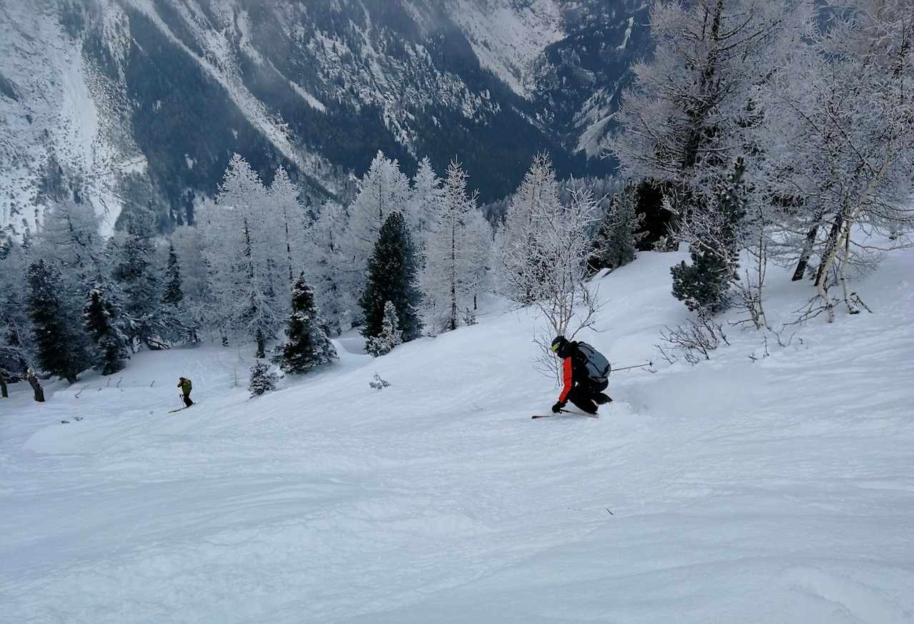 Skiing amongst the snow topped pine trees