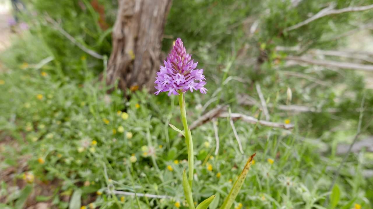 Springtime in the Akamas National Park