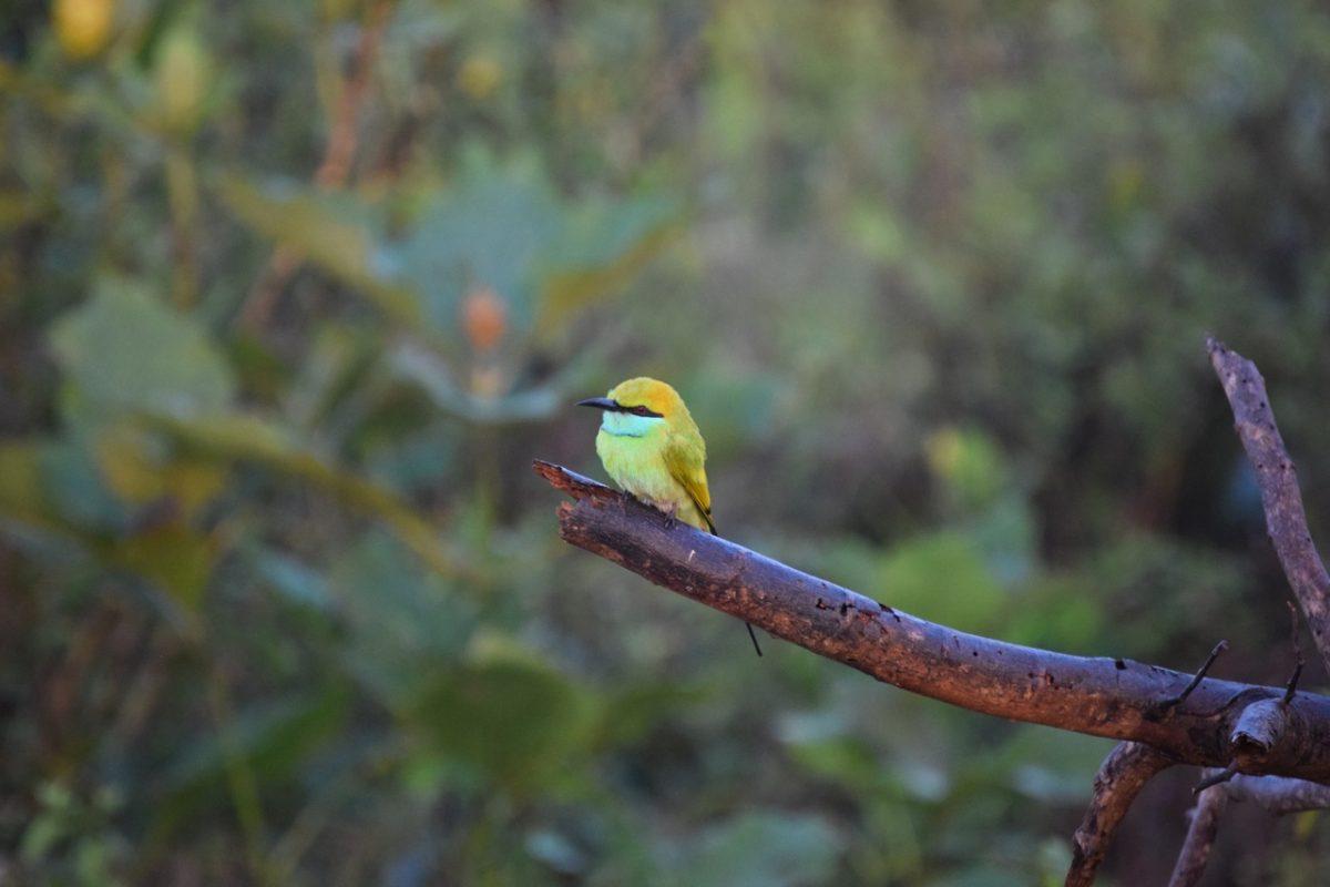 Sri Lanka Udawalawe bird