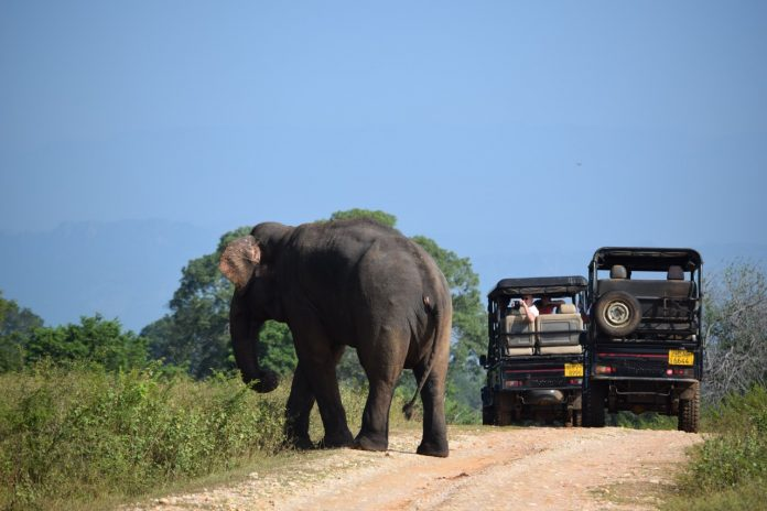 Sri Lanka Udawalawe elephant and jeeps