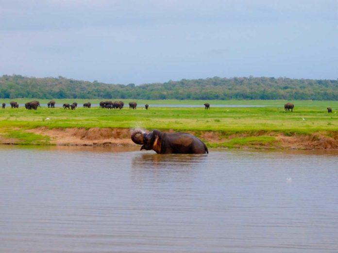 Sri Lanka road trip - Elephant Bath