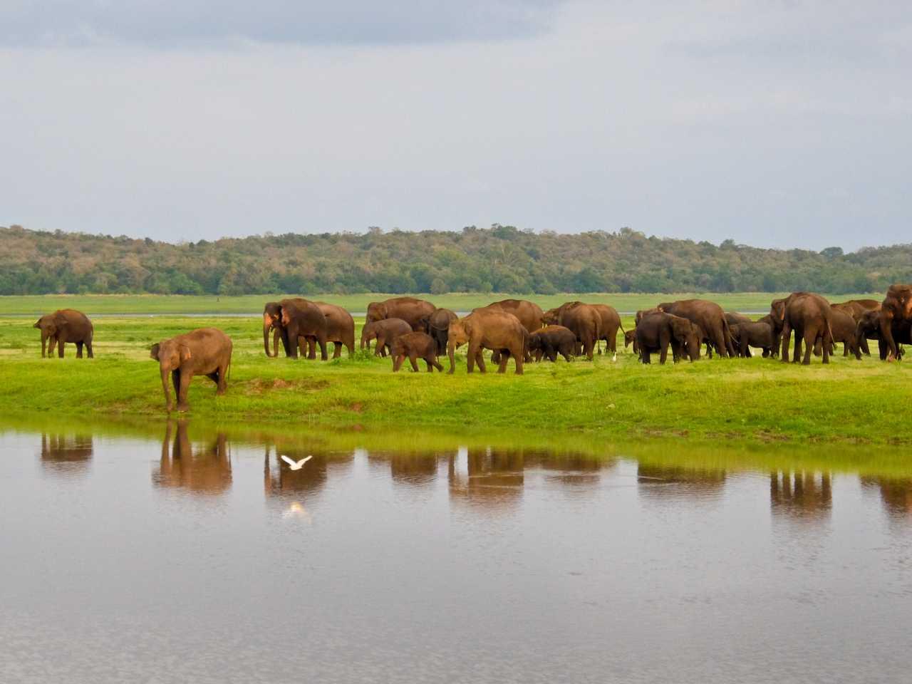 Sri Lanka road trip - Elephants Reflection