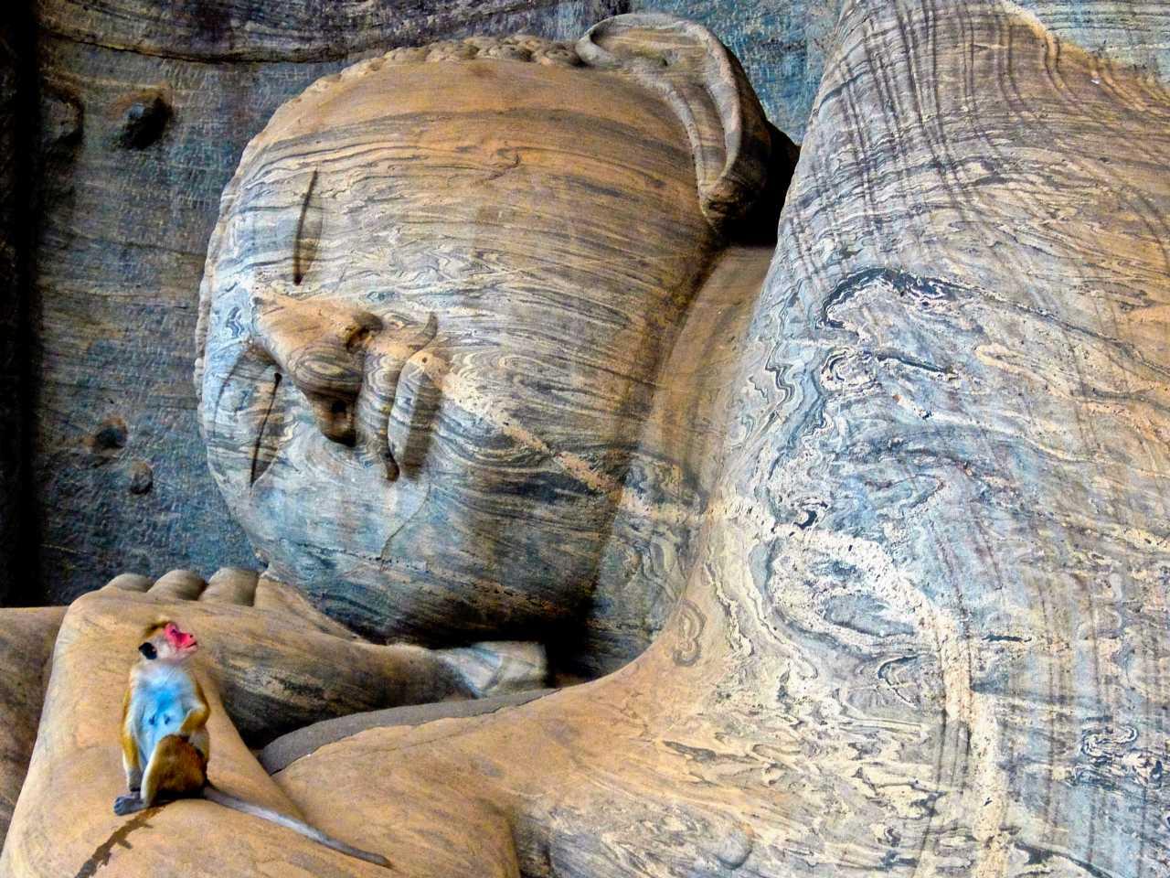 Sri Lanka road trip - Monkey and Buddha