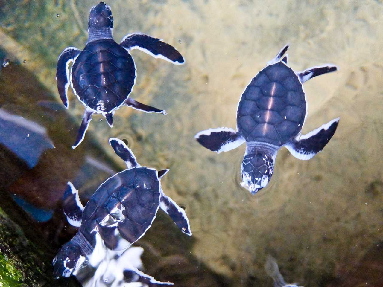 Sri Lanka road trip - Young Turtles