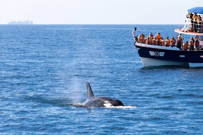 Sri Lanka whale watching