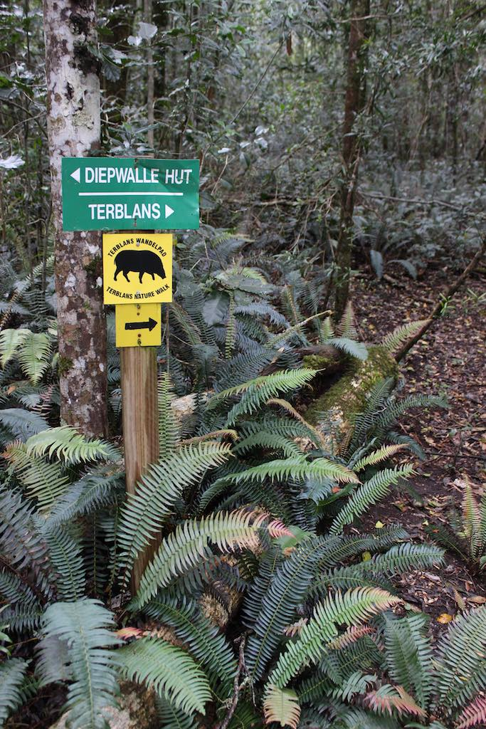 The ferns that Knysna was named for on the Terblans trail