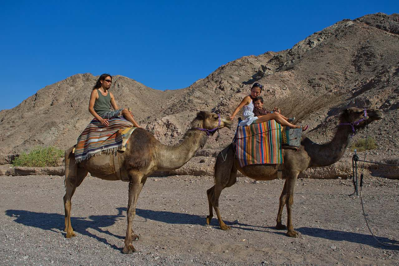 Tourists riding camels near Eilat
