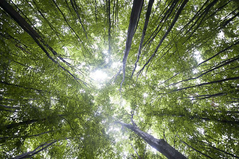 Transylvania has some of the largest and most untouched beech and oak forests in Europe