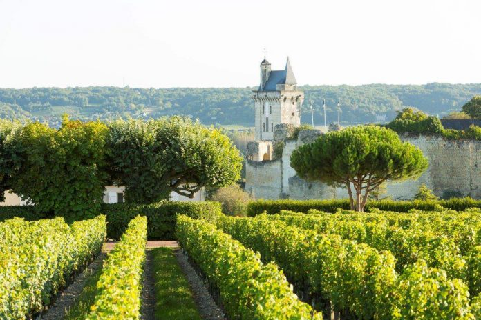 Vines and Château Chinon