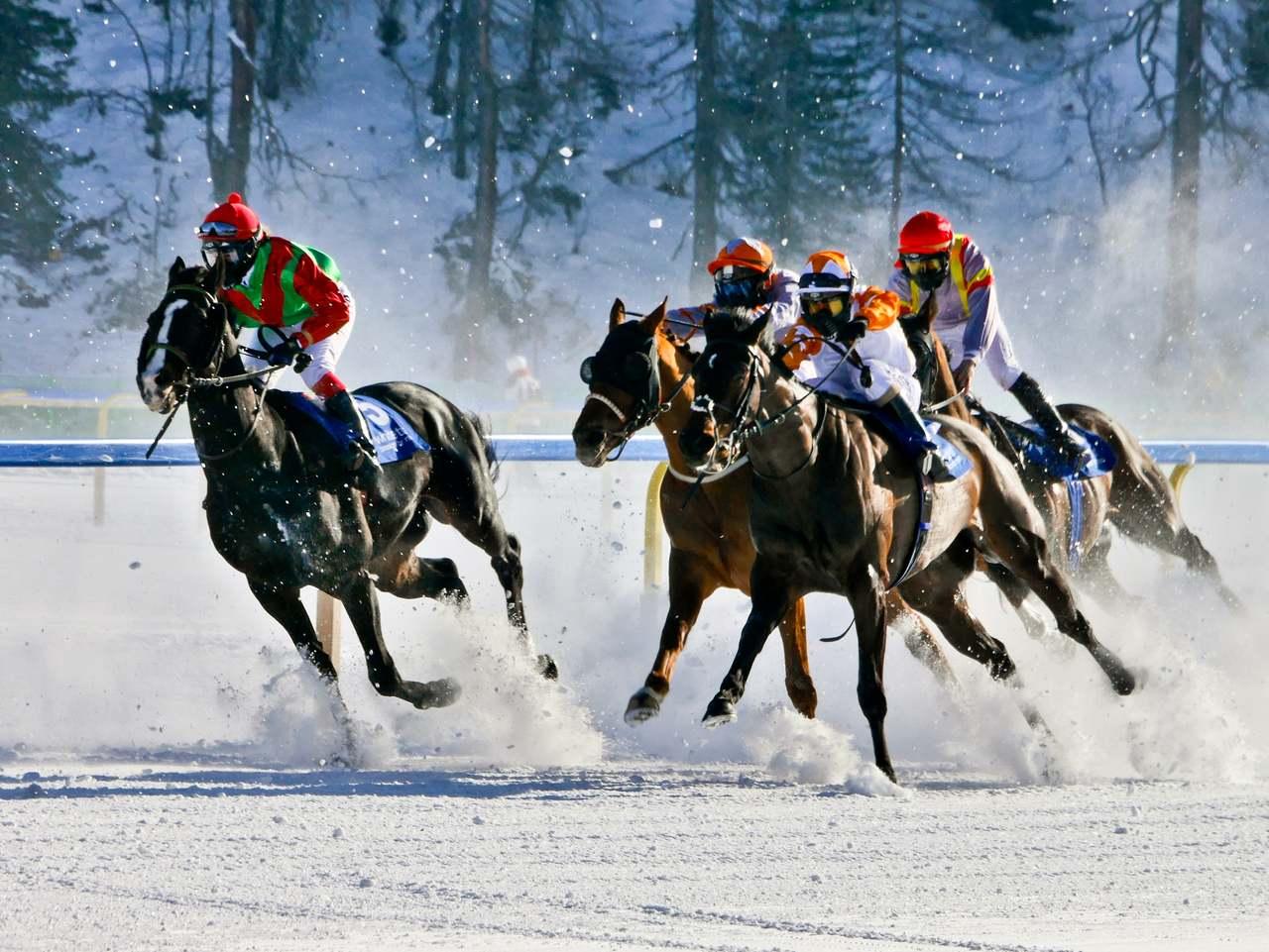 Horse Racing On Snow White Turf Racing Festival St Moritz Switzerland