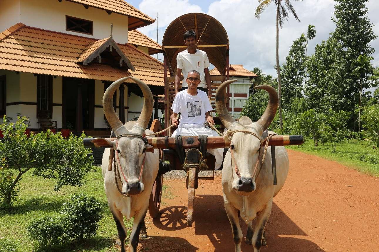 Transfer is by bullock cart