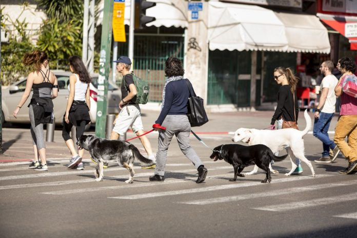 dogs crossing the road in Tel Aviv