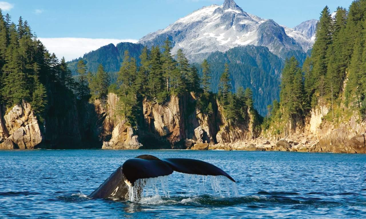 humb back whale small